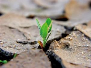 La forza del seme